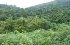 Provincia vietnamita de Bac Giang fortalece gestión de bosques