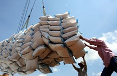 Ministerio de Finanzas de Vietnam selecciona a licitantes para suministro de reserva de arroz