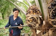 Tailandia usará blockchain en comercio de palma de aceite