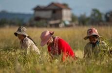 Camboya eliminará veda de exportaciones de pescado y arroz