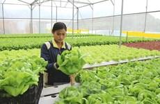 Sector agrícola de Hanoi busca crecer después de la epidemia
