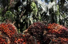 India retoma compras de aceite de palma de Malasia