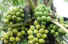 Cumple estándares internacionales zona de cultivo de coco orgánico vietnamita