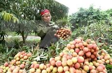 Vietnam y China impulsan intercambio comercial