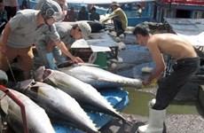 Abogan por incentivar en Vietnam el consumo doméstico de atún
