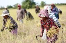 Camboya toma medidas de aumentar producción agrícola