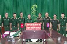Provincia vietnamita entrega plántulas frutales a Laos