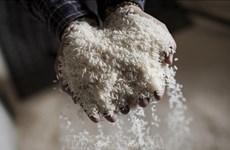 Provincia vietnamita apoya con mil 300 toneladas de arroz a los afectados por sequía