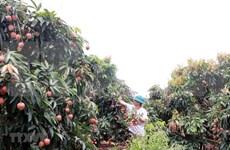 Provincia vietnamita de Bac Giang por promover la agricultura de alta tecnología