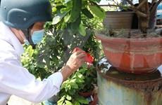 Ciudad Ho Chi Minh advierte sobre el brote de dengue en la temporada de lluvias