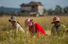 Agricultura camboyana sin capacidad de compensar situación de desempleos en el país