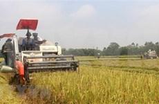 Exportaciones de arroz de Vietnam muestran señales positivas
