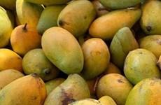 Camboya exportará 500 mil toneladas de mango a China