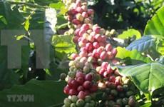 Evalúan oportunidades y desafíos para productos agrícolas vietnamitas en el EVFTA