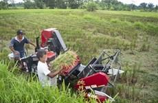 Indonesia amplia extensión de tierra de cultivo
