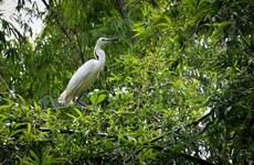 Vietnam se clasifica a la lista de países con alta biodiversidad en el mundo