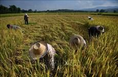 Tailandia se esfuerza por captar inversiones extranjeras en agricultura