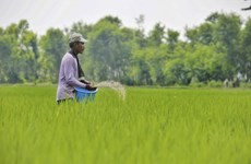Indonesia por ampliar terrenos para el cultivo de arroz