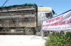 Vietnam pone en cuarentena cerdos importados de Tailandia