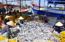 Crece producción pesquera de Vietnam en primera mitad de 2020