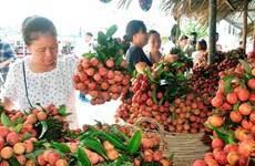 Cadena de producción y consumo de productos agrícolas en Hanoi
