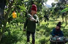Exportará Vietnam mango a Estados Unidos