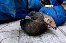 Cadena de suministro de animales silvestres aumenta riesgo de transmisión del coronavirus