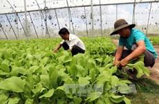 Ministerio de Camboya firma acuerdo sobre desarrollo de vegetales con empresa japonesa