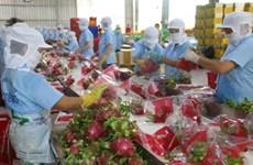Diversificación de mercados favorece a industria frutícola de Vietnam