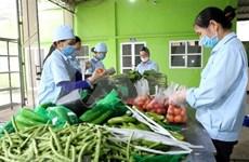 Provincia vietnamita verifica información de prohibición de productos agrícolas de Camboya