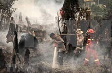 Indonesia declara estado de emergencia por incendios forestales en Kalimantan
