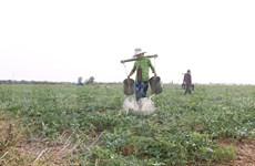 Reconocen a dos distritos vietnamitas con cumplimiento de nuevos estándares rurales