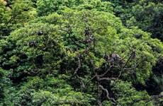 Establecen en provincia vietnamita reserva natural de Dong Chau-Khe Nuoc Trong