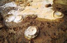 Descubren en provincia vietnamita fósiles con unos 200 millones de años de antigüedad