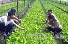 Adopta Vietnam proyecto de desarrollo de agricultura orgánica para periodo 2020-2030