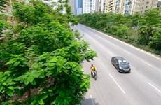 Planean plantar 600 mil árboles en Hanoi este año