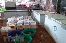 Incautan en Myanmar drogas valoradas en un millón de dólares
