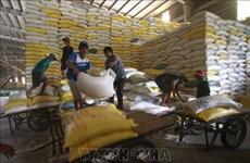 Prosigue tendencia alcista de las exportaciones vietnamitas de arroz