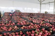 Exportaciones de verduras y frutas de Vietnam aumentan tras meses de caída
