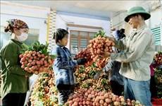 Empresas vietnamitas buscan aumentar exportaciones a China