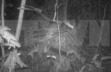 Provincia vietnamita por proteger osos tibetanos y civetas
