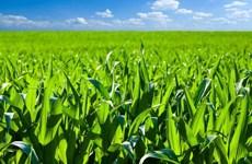 Tailandia busca promover la agricultura verde