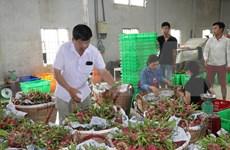 Ventas agrícolas de Vietnam a Tailandia registran crecimiento notable