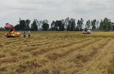 Provincia vietnamita de Bac Lieu expande cultivo de las mejores variedades de arroz del mundo