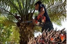 Malasia apelará ante la OMC sobre la restricción de la UE al aceite de palma
