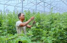 Ciudad vietnamita de Can Tho crea condición a la operación del grupo indio TATA