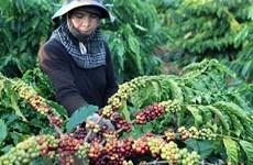 Disminuyen exportaciones de productos agrícolas vietnamitas