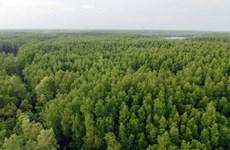 Vietnam se empeña en preservar la Reserva de Biosfera del Bosque de manglares Can Gio