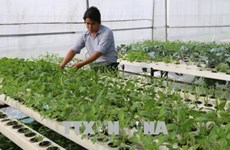 Provincia vietnamita de Tien Giang impulsa reestructuración agrícola