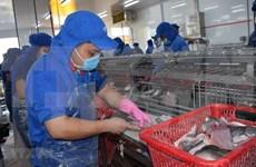 Aumentan exportaciones vietnamitas de mariscos a la UE